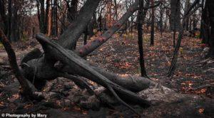 Австралийские леса